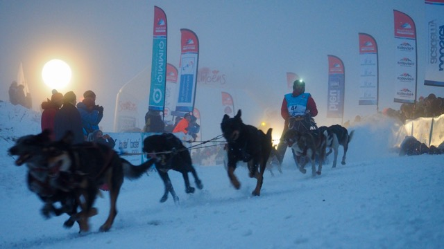 chiens de traineau depart course
