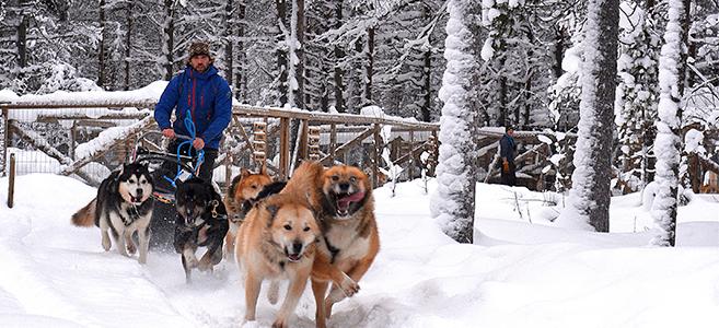 voyage-finlande-traineau-chiens-depart