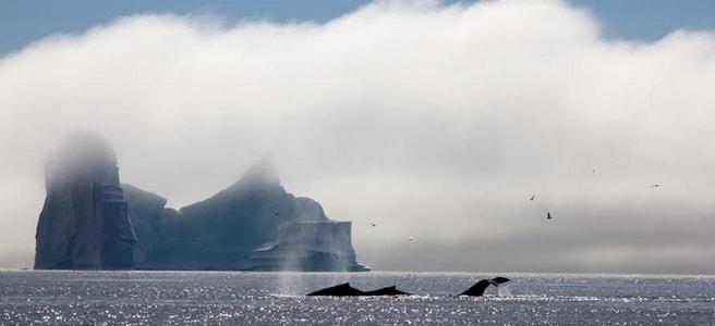 voyage-groenland-iceberg-baleines-c-kerdiles