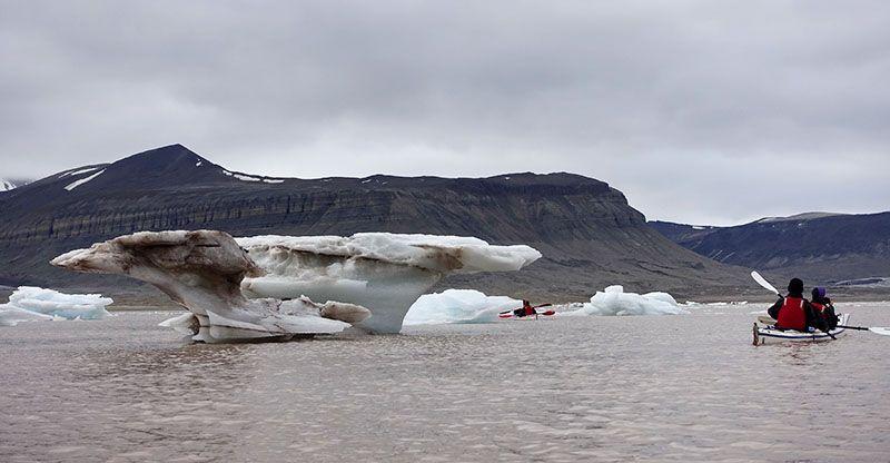 Kayak parmi les icebergs dans le fjord d'Ekman