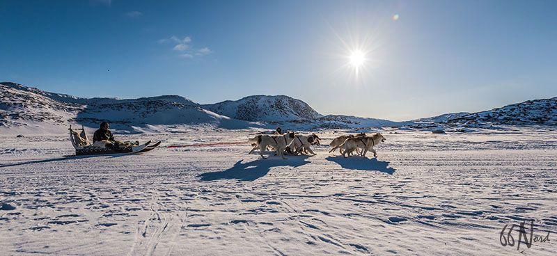 Traîneau à chiens au Groenland