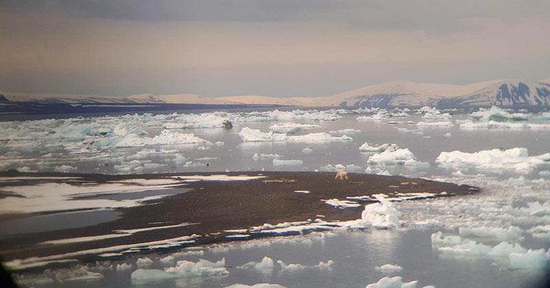 Ours polaire au Svalbard, observé de loin par le groupe ©Maud Sevaux