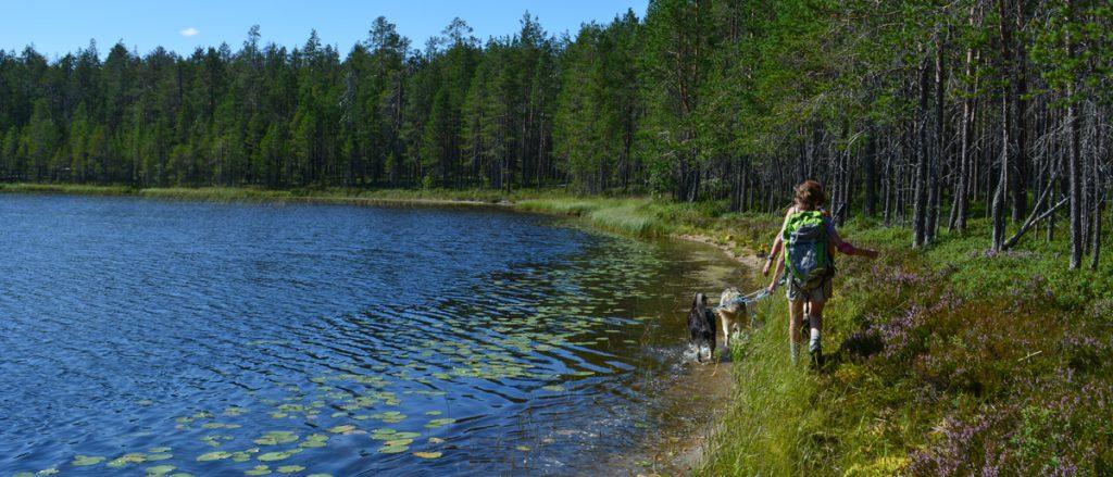 Cani-rando en Finlande