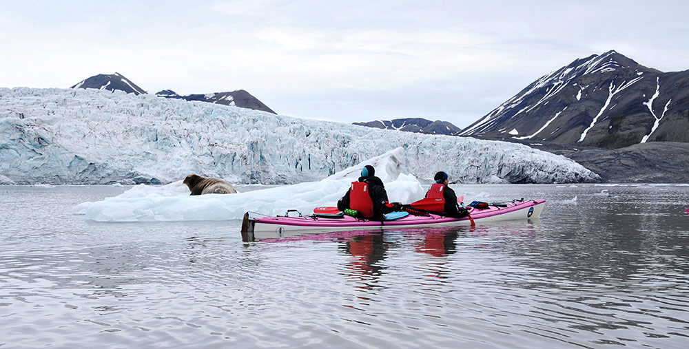 En kayak de mer parmi les icebergs, non loin d'un phoque barbu. Spitzberg ©Camille Marchand, voyageuse 66°Nord