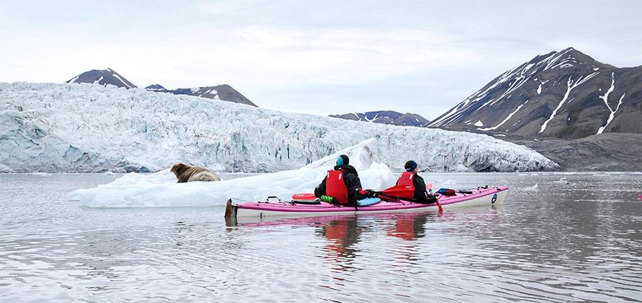 """Rencontre avec un phoque barbu au Spitzberg, voyage """"Les cinq glaciers"""" ©Camille Marchand, voyageuse 66°Nord"""