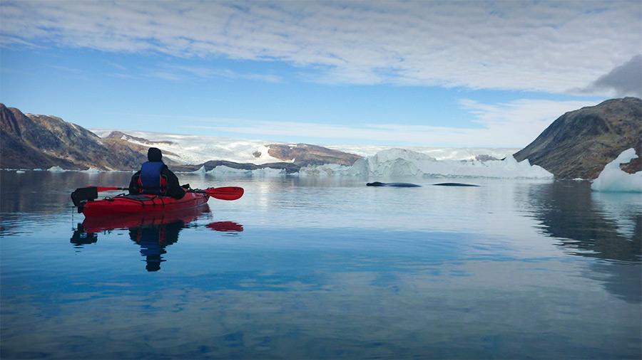 Observation d'une baleine à bosse au Groenland, depuis nos kayaks de mer ©Cendrine Corouge, conseillère spécialiste 66°Nord