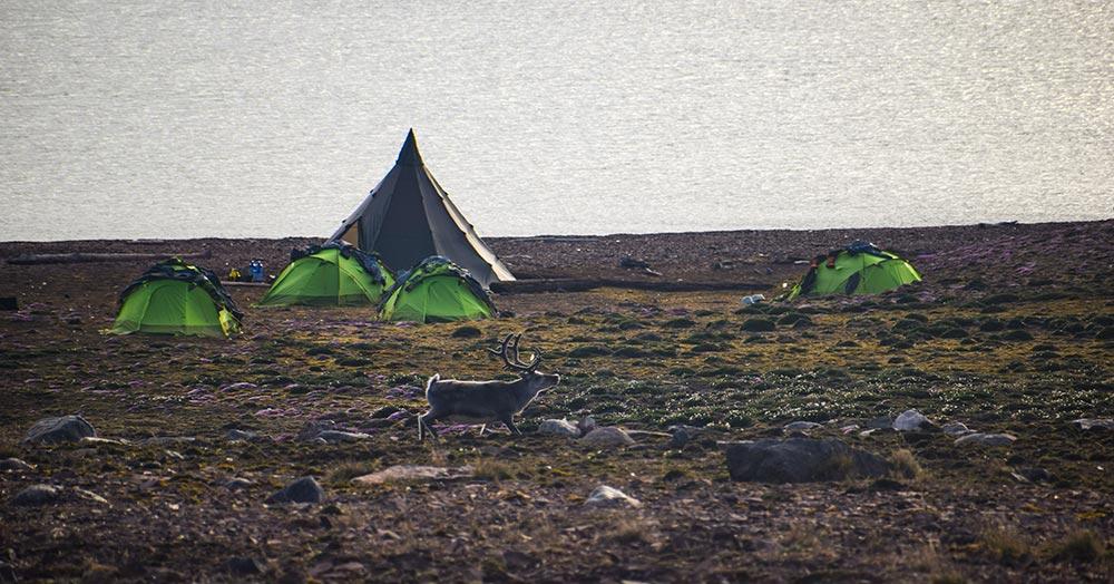 Renne du Svalbard ©Louis, voyageur 66°Nord/Aventure Hustive 2