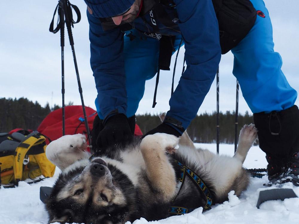 Moment câlin avec les chiens ©Charles Ariza, guide 66°Nord