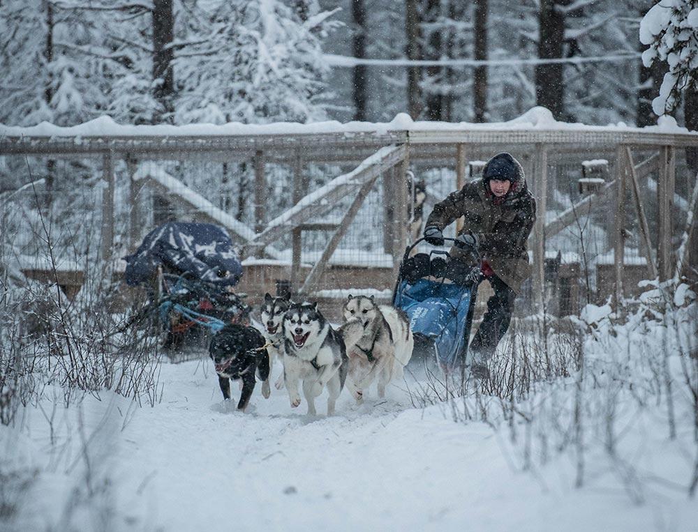 Départ en chien de traineau du chenil, nos huskies sont à fond ©Yannick Long, guide 66°Nord