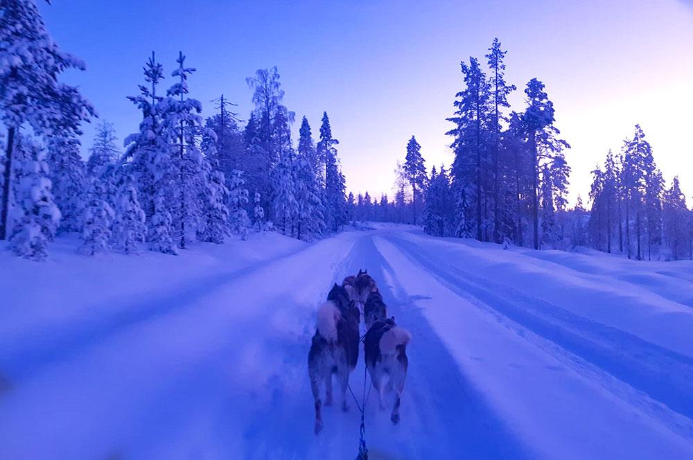 Traîneau à chiens en Laponie finlandaise. Crédit Maud Sevaux, guide 66°Nord