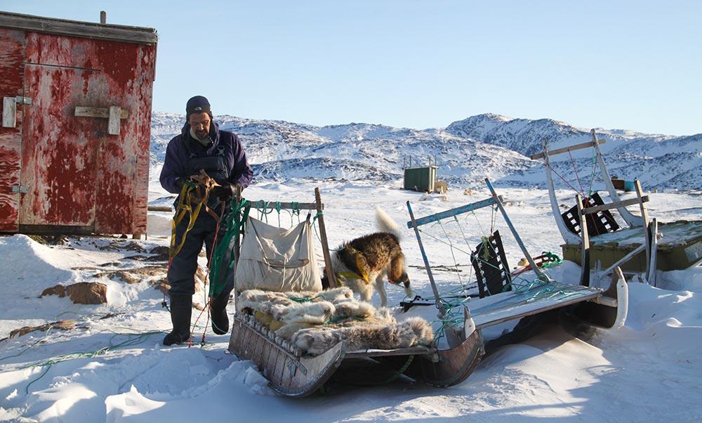 Préparation du traîneau à chiens