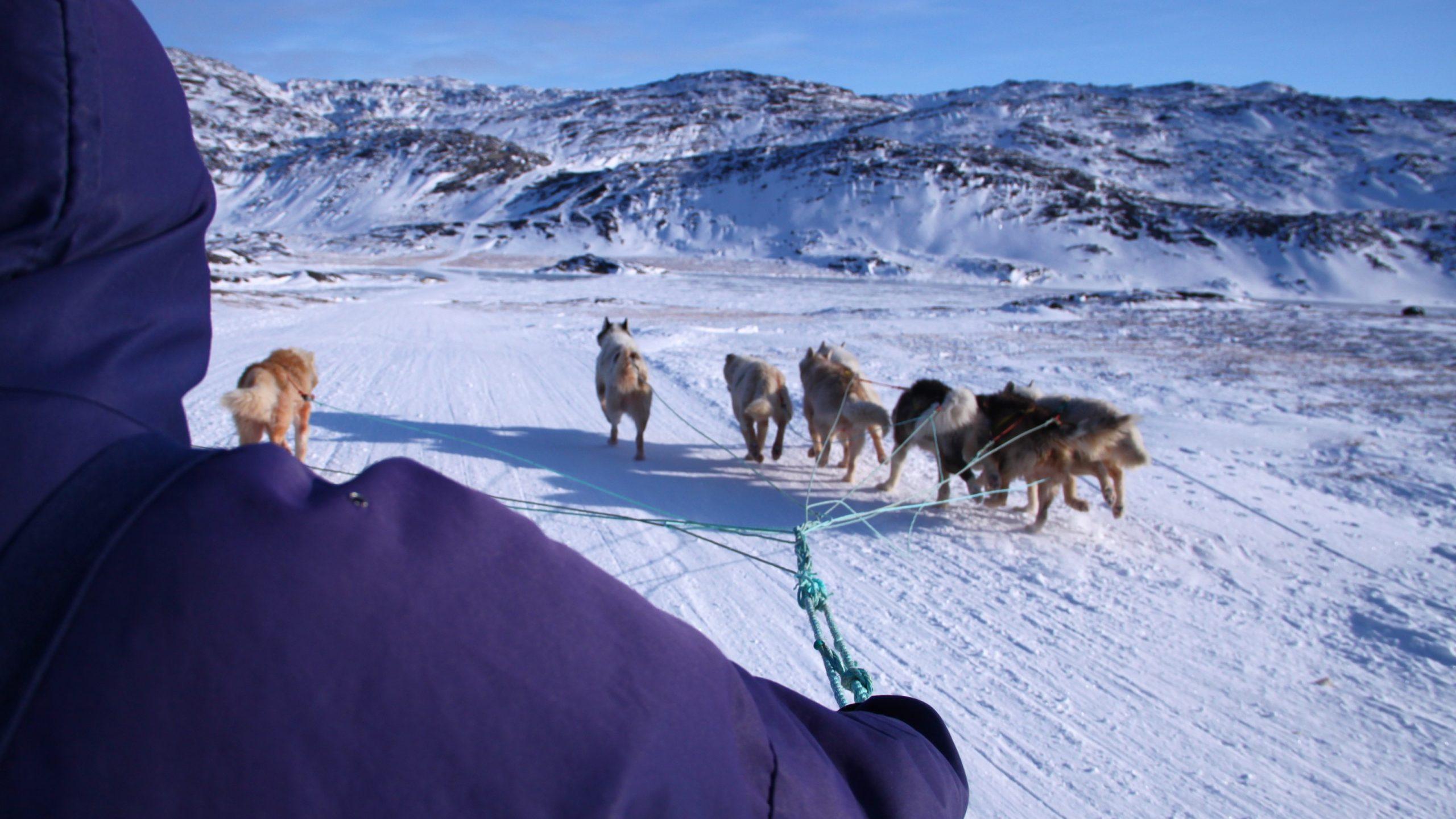 Traîneau à chiens sur la côte Ouest du Groenland